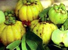 Garcinia Cambogia natural fat burning fruit