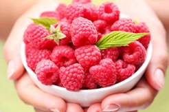 Raspberry ketone does it really help you lose weight