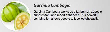 Garcinia cambogia explained